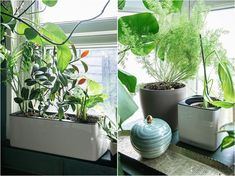 2-types-self-watering-planters-lechuza-pon-product-review Dark Green Kitchen, Festoon Lights, Plant Diseases, Self Watering Planter, Pergola Canopy, Black Garden, Yellow Leaves, Plant Needs, Small Plants