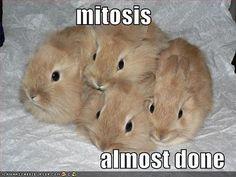 Rabbit House Society. Bunnies make great indoor pets!