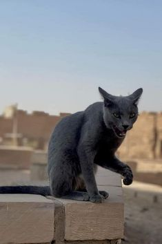 Cats In Ancient Egypt, Warrior Cats, Beautiful Cats, Panther, Animals And Pets, Cute Cats, Egyptian, Creatures, Russia