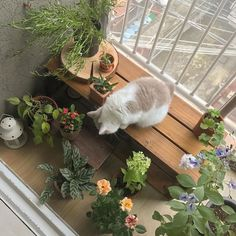 """My personal Aesthetic (Light&soft version)"" "" Aesthetic Rooms, Aesthetic Plants, Cat Aesthetic, Japanese Aesthetic, Korean Aesthetic, Aesthetic Pictures, Cute Cats, Pretty Cats, Cute Animals"