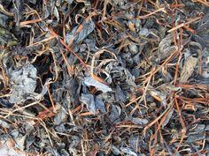 Our dried indigo - Growing Indigo Agriculture, How To Dry Basil, Indigo, Herbs, Garden, Garten, Indigo Dye, Lawn And Garden, Herb