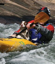 """""""Why are my eyes so big? I thought I could swim in this water! """"Fuzz, the Scottish sheep dog, sits with kayaker Daniel Barnard, who saved him out of the water mass of the Asrivier outside Clarens. Photo: Pieter Du Plessis"""
