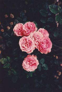 Me gusta cuando me das flores