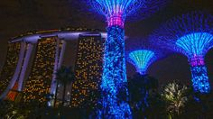 Singapore 4K Gardens by the Bay at night 2015 Marina bay sands hotel & D...