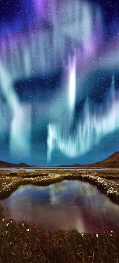 The Northern Light over the marsh landscape
