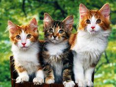 Catatan si Kucing: Ciri Kucing Sakit dan Jenis-Jenis Penyakit Kucing