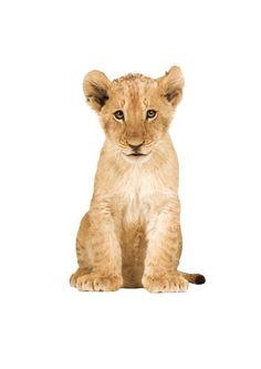 Jut en Juul Lifestyle for Kids : Safari Friends - LIon Cub leeuw Wall Stickers Animals, Wall Stickers Home Decor, Lion Photography, Design3000, Lion Illustration, Amsterdam, Super Cute Animals, Adorable Animals, Home Decor Mirrors