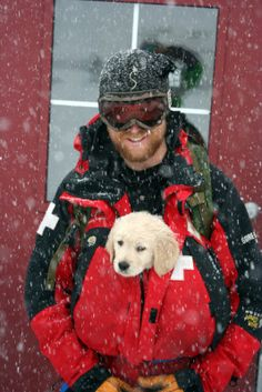 Tremper!  The newest golden trainee for ski patrol!  Adorable