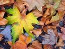 Dieu fait l'automne... c'est beau ! - Choisis la Vie