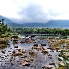 Meet a moose at Baxter State Park. | 38 Awesome Things You Should Do When You Go To Maine