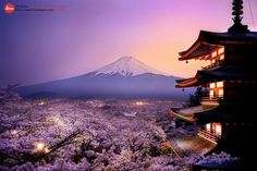 zekkei-beautiful-scenery:    Cherry blossoms in Japan  Sakura  桜咲く日本  世界の絶景 Zekkei Beautiful Breathtaking Scenery をアップしています♫ 画像→     (do-nothingから)