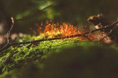 Symbiosis by Dennis Meene, via Behance