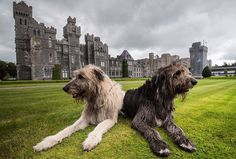 Photo by @jeffmauritzen / Words by NatGeo writer Justin Kavanagh. // Stories swirl easily around majestic Irish estates like small whirlpools in the long flow of Celtic history. And there is none more majestic than Ashford Castle in County Mayo. Legends still linger here like that of the Irish pirate queen Grace O'Malley, who once threatened this castle, sailing from her own fortress on Clare Island. Other tales locals would tell you involved Princess Grace of Monaco, or Edward, Prince of…