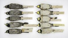 Vroeger waren de vogels zwarter - De Standaard
