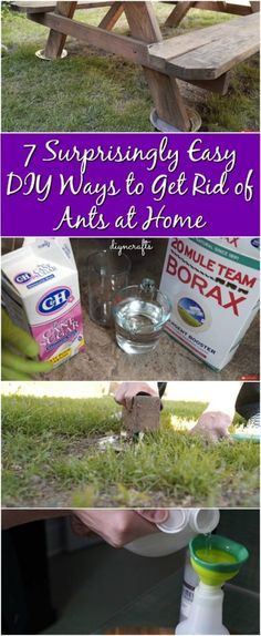 7 Surprisingly Easy DIY Ways to Get Rid of Ants at Home {Video Tutorials} Garden Bugs, Garden Pests, Roots Show, Ants In House, Organic Weed Control, Get Rid Of Ants, Tricks, Cleaning Hacks, Life Hacks