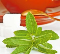 Stévia - sladká tráva, ktorá lieči Stevia, Healing Herbs, Medicinal Plants, Detox, Korn, Strawberry, Gardening, Fruit, Health