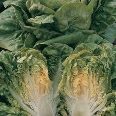Lettuce 'Chartwell' (Romaine) - Salad Seeds - Thompson & Morgan