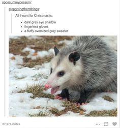 She wants to look like an opossum Cool Tumblr, Funny Tumblr Posts, Baguio, Dark Grey Eyes, Funny Cute, Hilarious, Christmas Tumblr, Funny Animals, Cute Animals