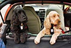According to AAA statistics, over 43 million people historically travel during the Thanksgiving holiday weekend, many of them with their furry adventurers! Click here for tips to make your trip with pets less stressful Cocker Spaniel Dog, English Cocker Spaniel, Spaniel Puppies, Springer Spaniel, Dog Seat Covers, Cockerspaniel, Dog Car Seats, Pet Travel, Travel Tips