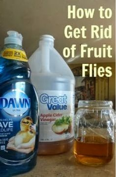 Melody's Harmonies: how to get rid of fruit flies