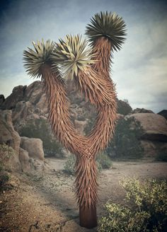 Description Inspired by one of nature's most beloved and rare icons! This desert monument is sure to get attention. Handcrafted and standing 9' tall, this art piece is the perfect anchor in any climat