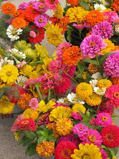 Zinnias, such a sun loving, heat tolerant, hearty flower. Toss some seeds in prepared soil in late spring and watch your garden burst with color in no time. You can grow these in containers as well if your yard space is limited. Makes for a great cut flow Sun Loving Plants, Sun Plants, Full Sun Flowers, Beautiful Flowers, Happy Flowers, Cut Flowers, Colorful Flowers, Garden Soil, Lawn And Garden