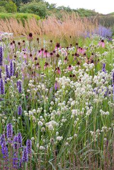 Agastache Black Adder + Eryngium yuccifolium + Echinacea pallida _ ornamental grass, Piet Oudolf Http://www.wildflowerfarm.com ---- grow these beauties!!!