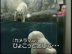 Don't worry about the baby seal hat. Polar bears are vegetarians.