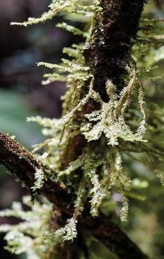 Moss   Flickr - Photo Sharing!
