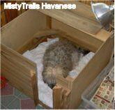 Dam in Whelping Box (design MistyTrails Havanese)... For puppies.