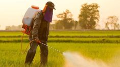 """The Word Health Organization's France-based cancer research arm recently classified Monsanto's flagship herbicide, Roundup, as """"probably"""" carcinogenic to humans. government consider the herbicide safe for agricultural use? Popular American Foods, Mississippi, Cannabis, Diabetes, The Frankenstein, Nova Era, Fukuoka, Environmental Issues, Stockholm"""