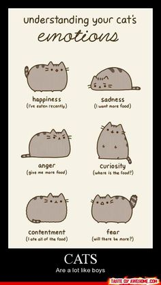 "Ignore the Reasons Why Pusheen The Cat Would Make The Perfect Boyfriend"". Pusheen is a girl. Funny Cats, Funny Animals, Cute Animals, Dumb Cats, Funny Horses, Fat Cats, Cats And Kittens, Fat Kitty, Cats 101"