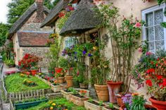 vorgarten englischer stil topfpflanzen keramik kletterpflanzen