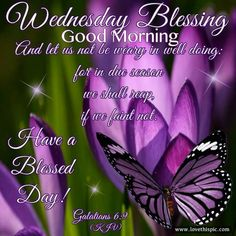 Blessing For Wednesday, Good Morning Blessed Sunday Morning, Wednesday Morning Greetings, Wednesday Hump Day, Blessed Wednesday, Happy Wednesday Quotes, Good Morning Wednesday, Thursday Quotes, Happy Quotes, Wednesday Prayer