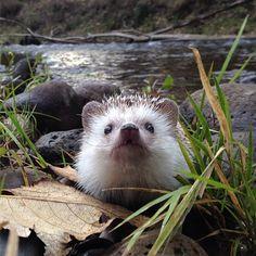 Biddy the hedgehog