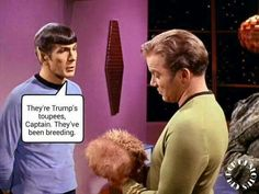 """""""They' Donald Trump's toupees, Captain. They've been breeding."""""""