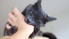 Kediniz sizi ısırıyorsa ve buna bir son vermek istiyorsanız bu yazı tam size göre.