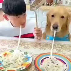 62 ideas funny animals humor lol pets for 2019 Funny Animal Videos, Cute Funny Animals, Funny Animal Pictures, Animal Memes, Cute Baby Animals, Funny Cute, Animal Humor, Funny Videos, Cute Puppies