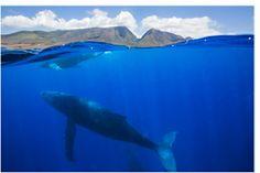 Whale in the Sea of Cortez_Baja Mexico