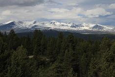 Mountains in Rondane and coniferous forest