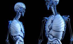 Colon Cancer, Perder 10 Kg, Brain Connections, Vitamin C Benefits, Gut Brain, Gut Bacteria, Autoimmune Disease, Stem Cells, Immune System