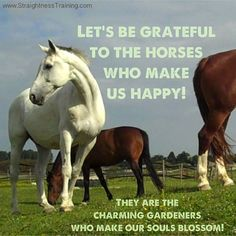 Let us be grateful to the horses who make us happy; they are the charming gardeners who make our souls blossom.    What are you most grateful for? Why are you thankful for your horse?