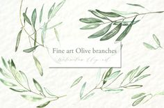 Olive branches. Watercolor clipart. by LABFcreations on Creative Market