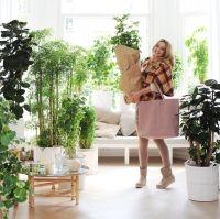 Geef je huis een nieuwe look met kamerplanten die bijdragen aan een frisse, groene start. | GekopGroen