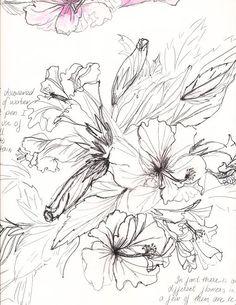 Hibiscus drawing - Google zoeken