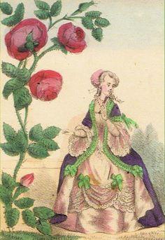 Winter Roses - Rosa Gallica