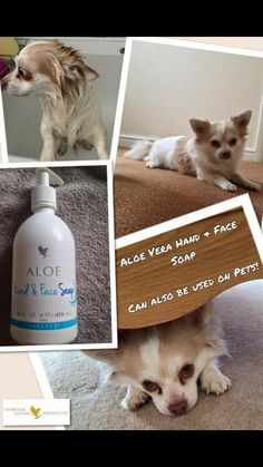 Aloe products can be used with our furbabies Natures goodness #lovealoe #ultimatewellnesswithaloe