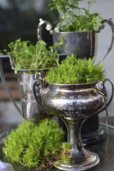 moss and succulents in old trophies. Plant moss and succulents in old trophies. moss and succulents in old trophies. Plant moss and succulents in old trophies. Old Trophies, Pot Plante, Silver Trays, Silver Plate, Thrift Store Finds, Thrift Stores, Vintage Silver, Antique Silver, Vintage Cups