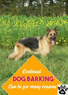 Tips And Tricks For Dog Barking #dogbarking Stop Dog Barking, Dog Hacks, Your Dog, Corgi, Bts, Animals, Animales, Corgis, Animaux