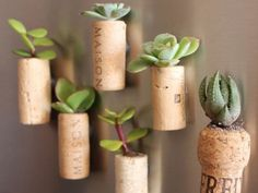DIY magnetic cork planters with succulents